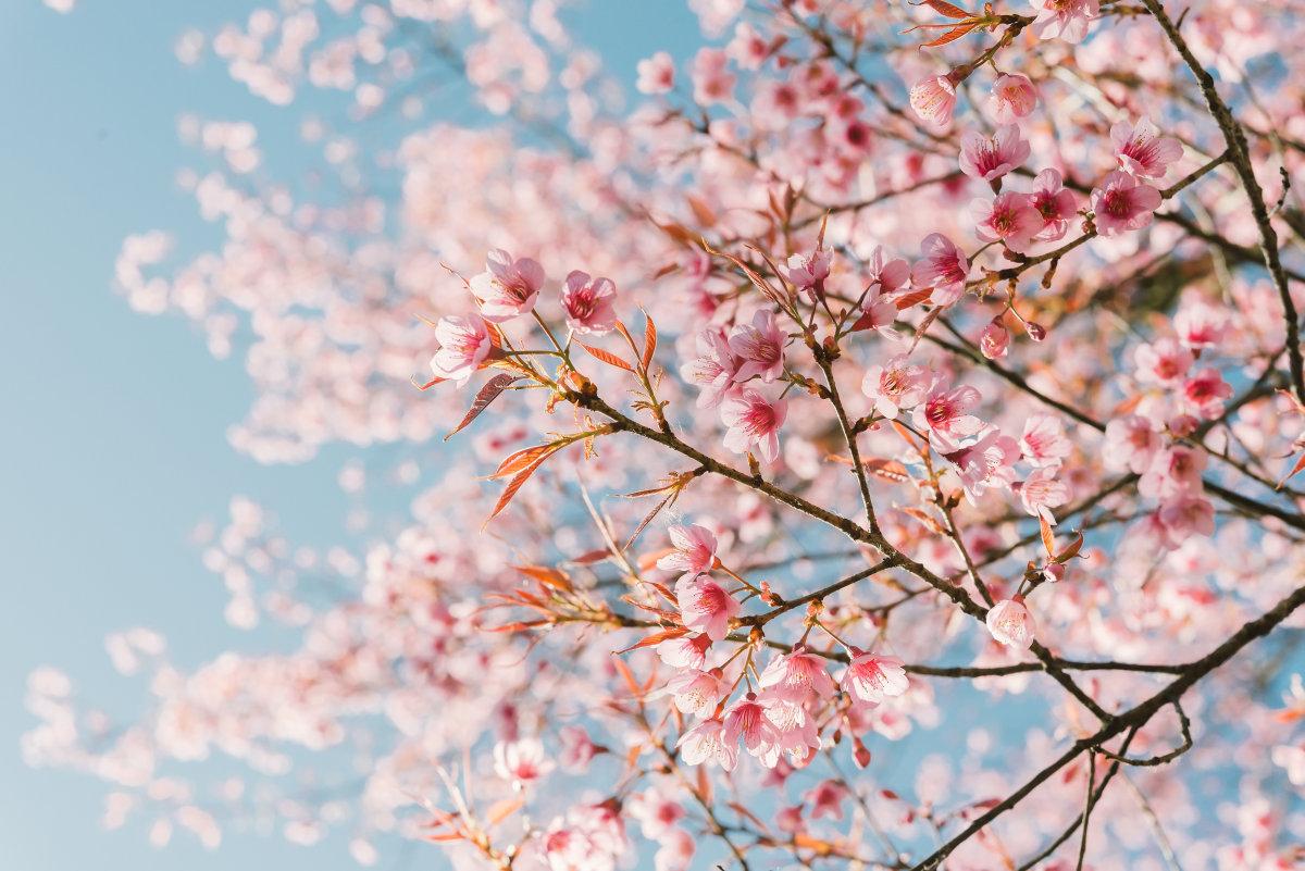 如何对抗春季过敏?卡赫蒸汽机帮您防患于未然